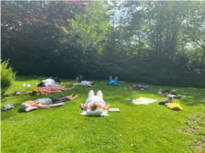 Breathwork, people lying on grass in sun